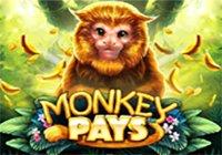 Monkey Pays